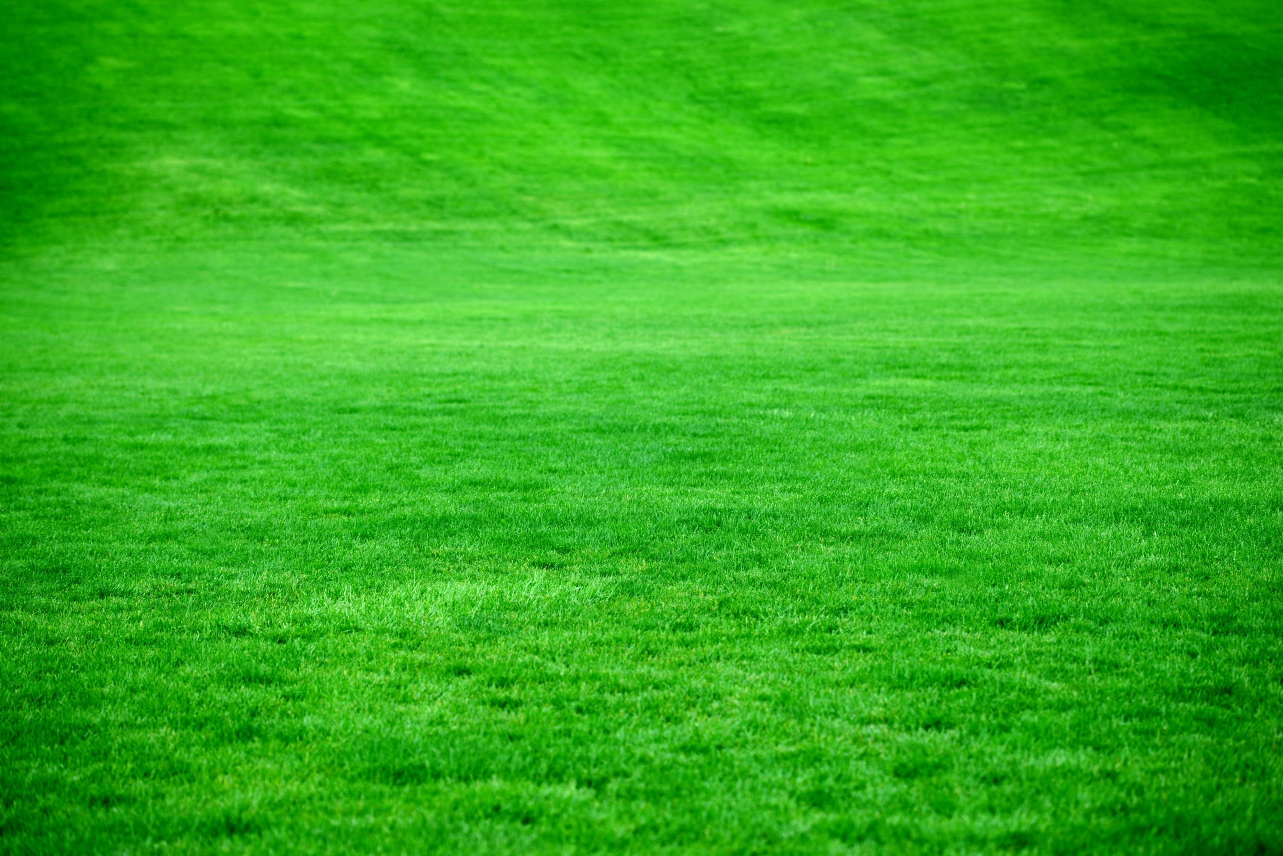 Cultivating a Lush Green Lawn